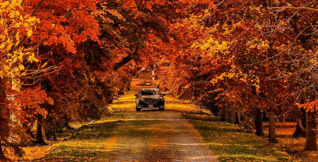 9 road trips to go on in Ontario before fall ends (PHOTOS)
