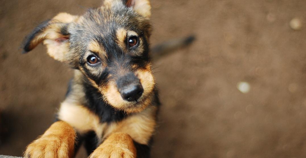 Puppy dog shutterstock