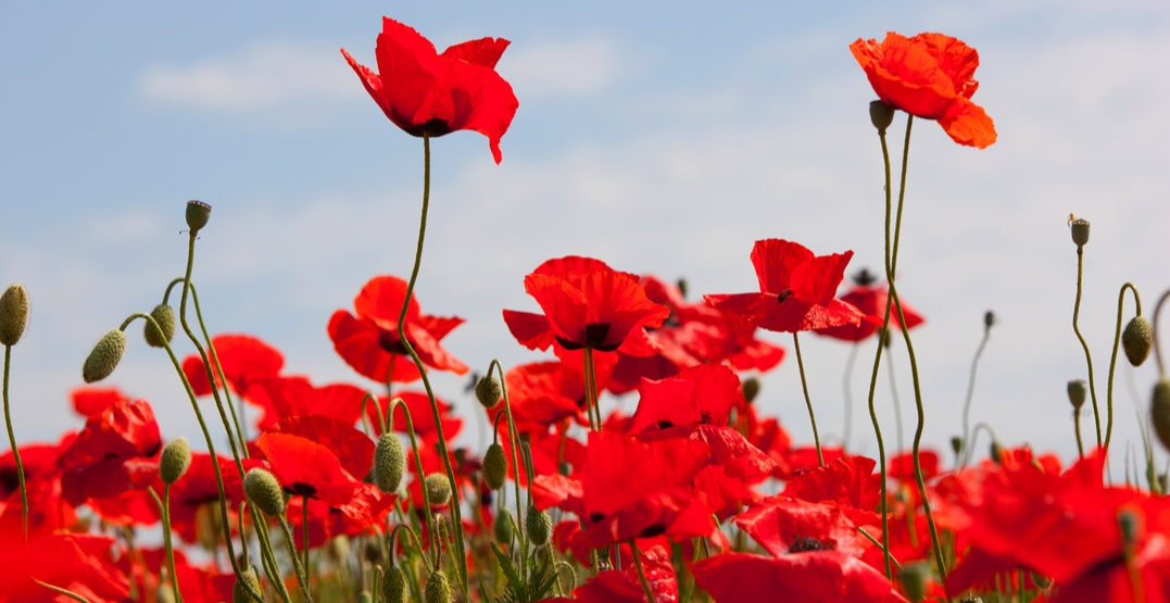 Here's what's open (and closed) in Calgary this Remembrance Day Saturday