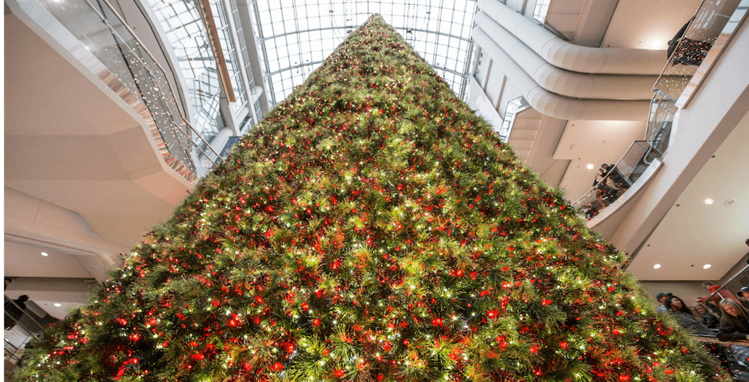 Toronto's 100-foot Christmas tree will be unveiled tomorrow night