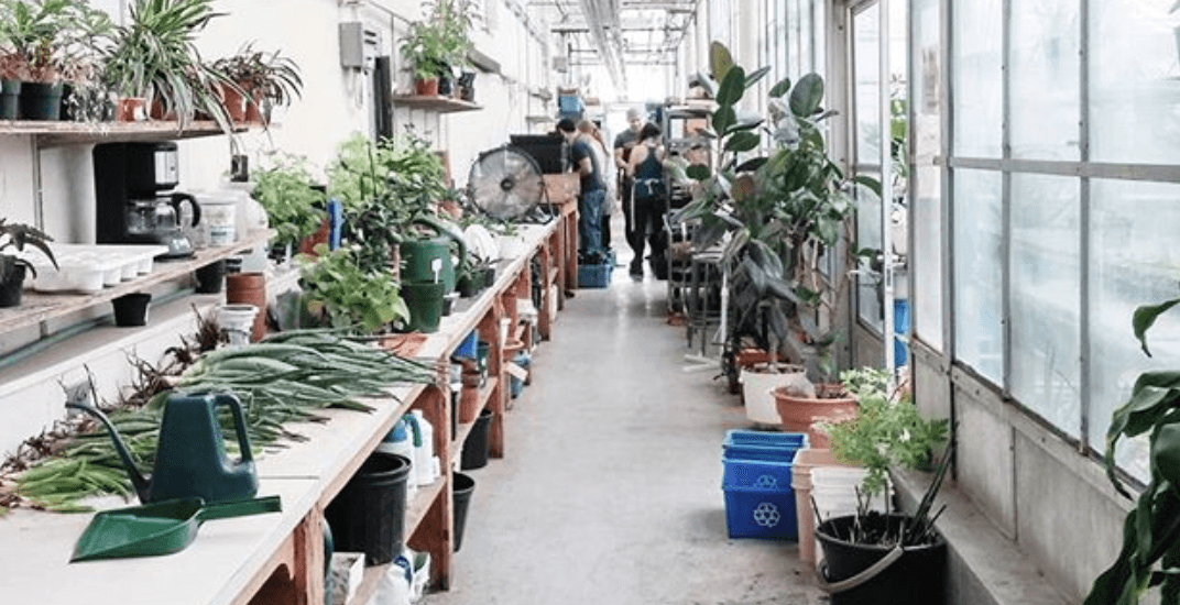 A sustainable Christmas market is coming to this Montreal rooftop greenhouse