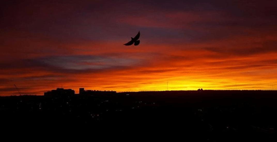 5 things to do in Calgary today: Friday, November 17