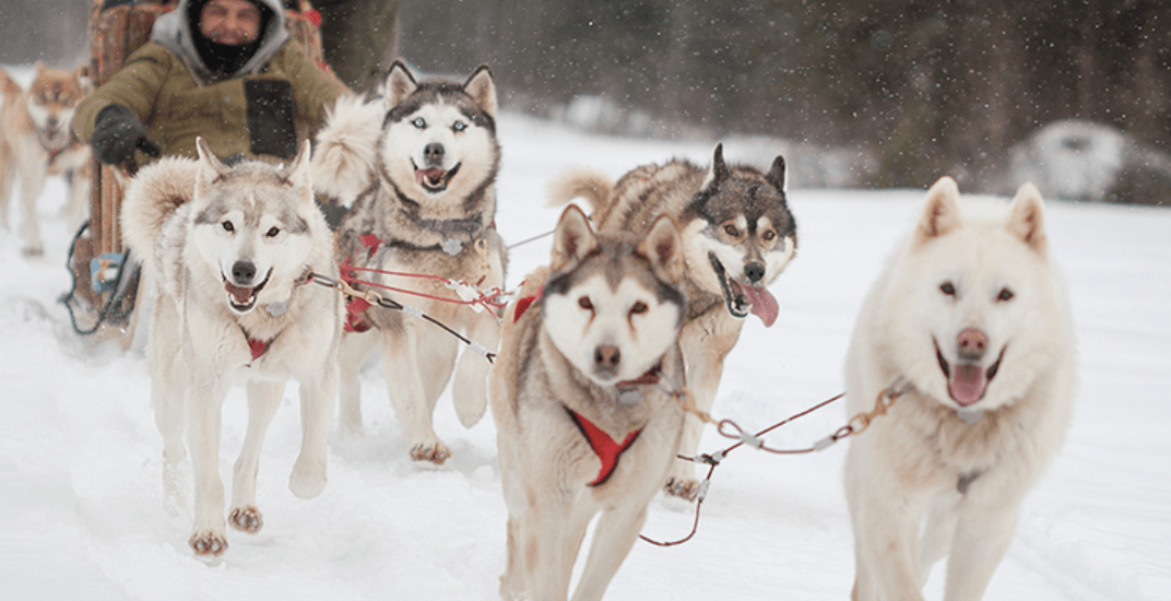 Winter wonderland: You can go dog sledding at this beautiful Quebec village