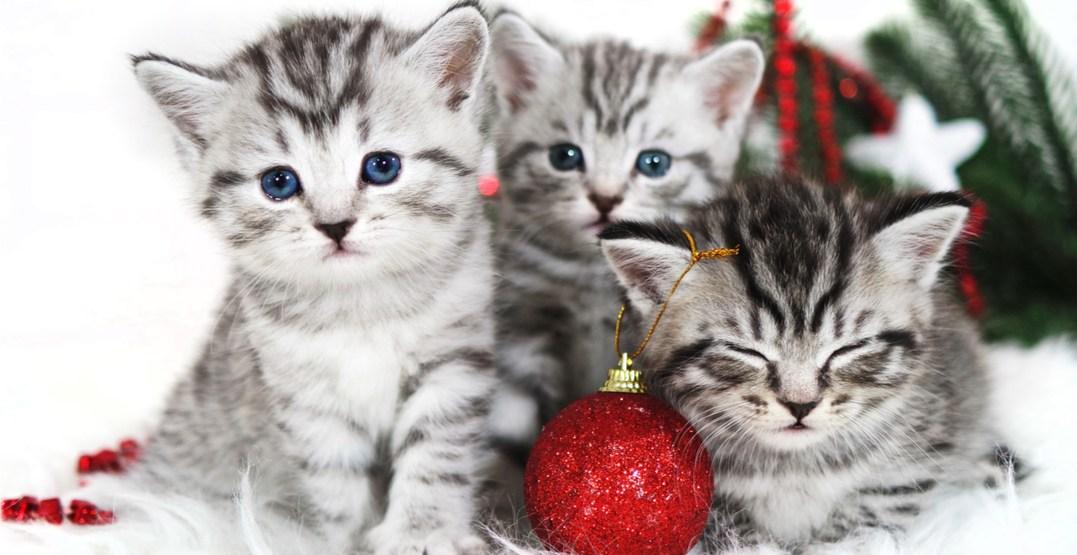 Ontario SPCA reducing cat adoption fees for Black Friday