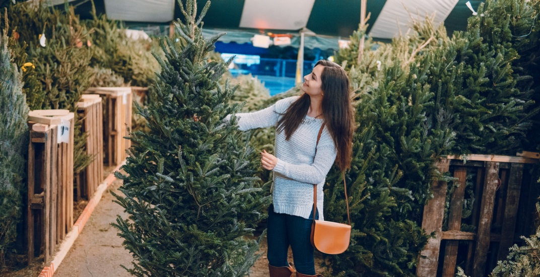 Christmas tree buying