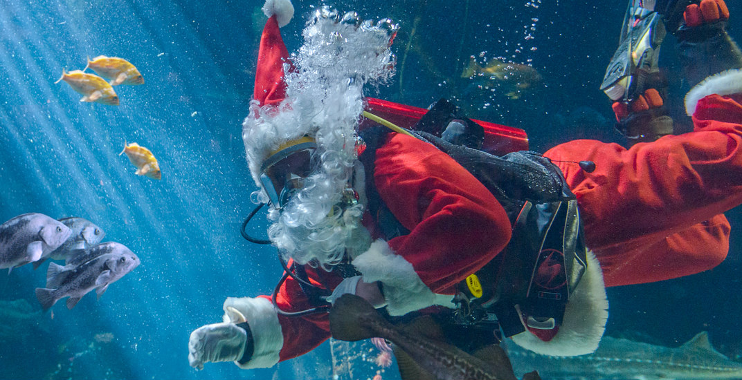 See Santa Claus scuba dive at Vancouver Aquarium beginning this month