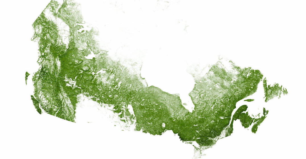 This is what Canada looks like when mapped with just its forests and trees (MAPS)