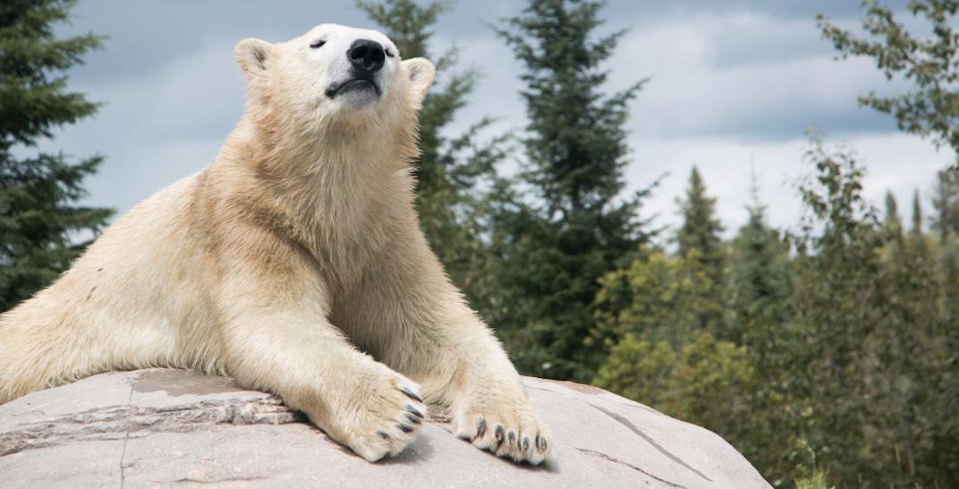 FYI: The world's largest polar bear habitat is in Ontario (PHOTOS)