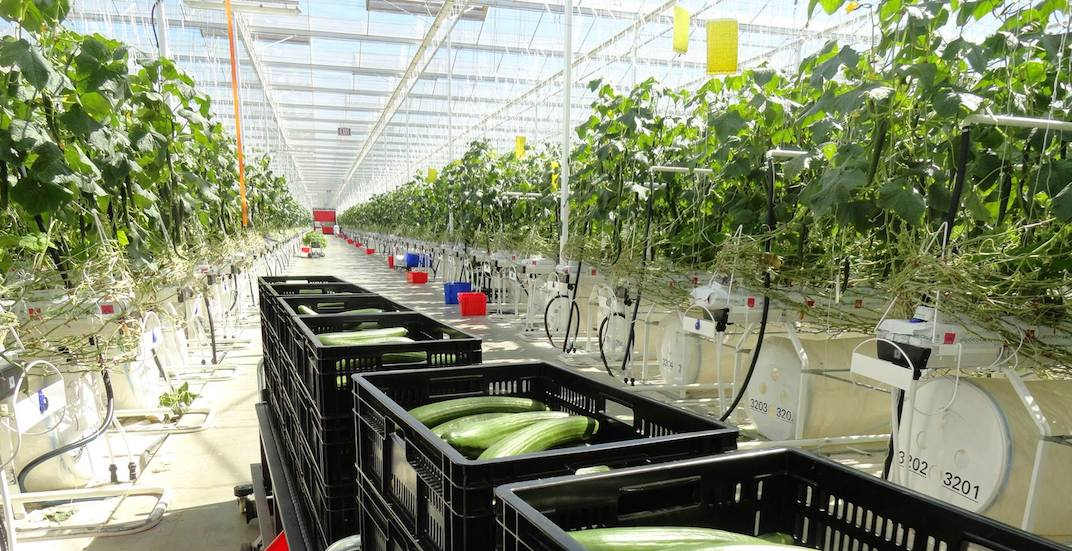 42 people sent to hospital after carbon monoxide exposure at Delta greenhouse