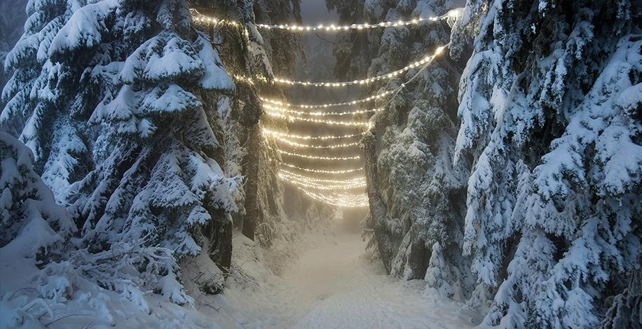 Grouse Mountain Light Walk (Grouse Mountain)