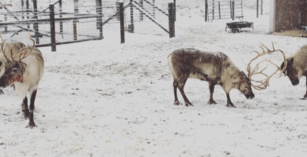Visit real-life reindeer at this magical farm just a few hours from Vancouver