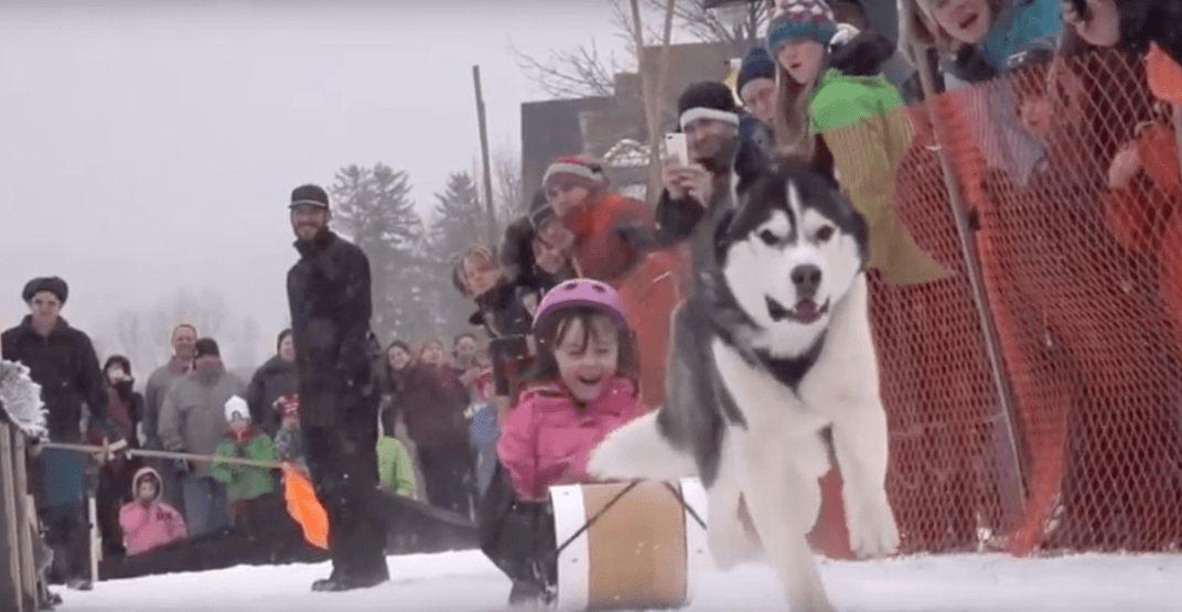 Watch a mini dogsled race at the Canmore Winter Carnival