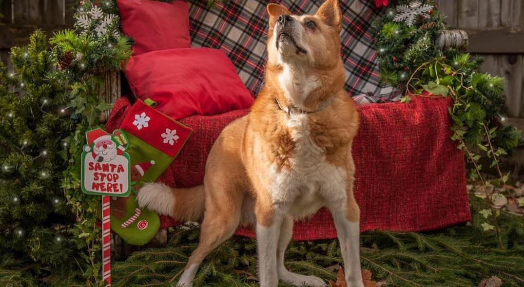 25 deserving dogs looking for a home this Christmas