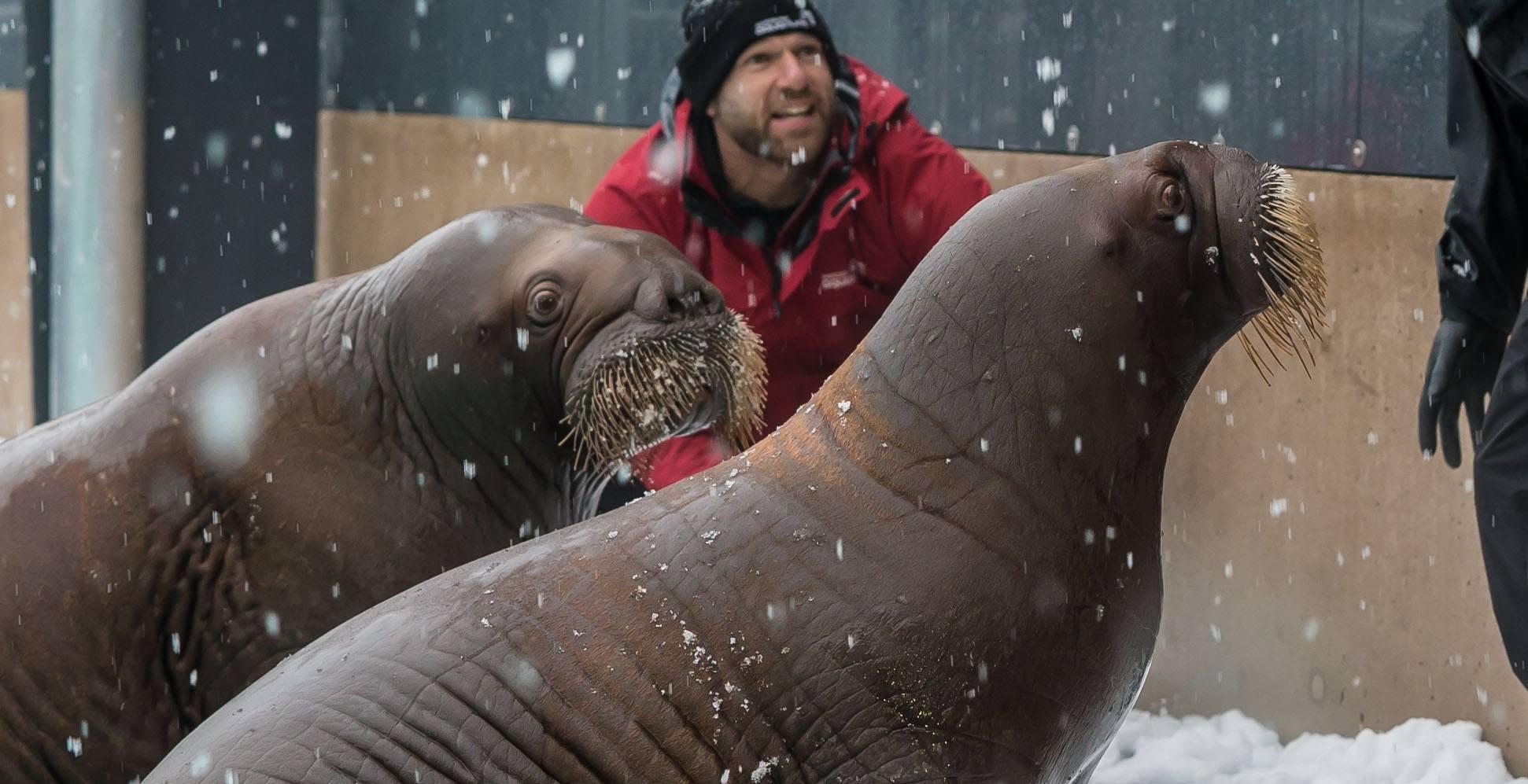 Balzak and lakina in snow vancouver aquarium