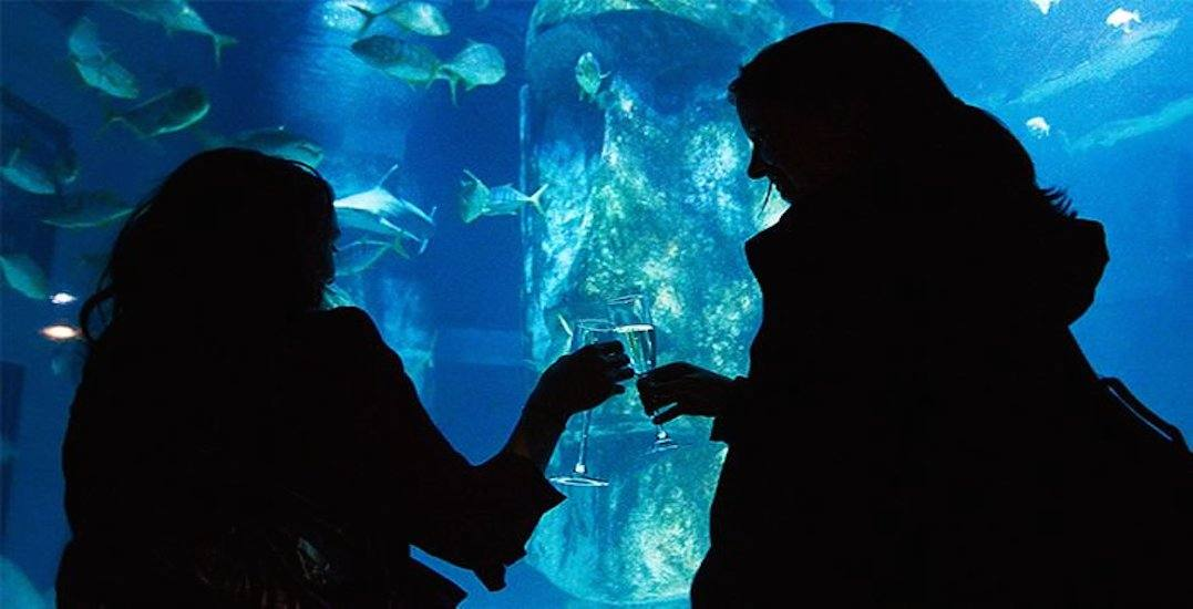 This Toronto aquarium is throwing a huge New Year's Eve party this year