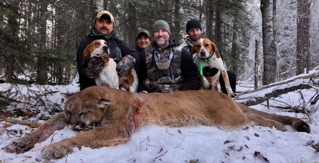 Canadians are pissed over TV host killing Albertan mountain lion