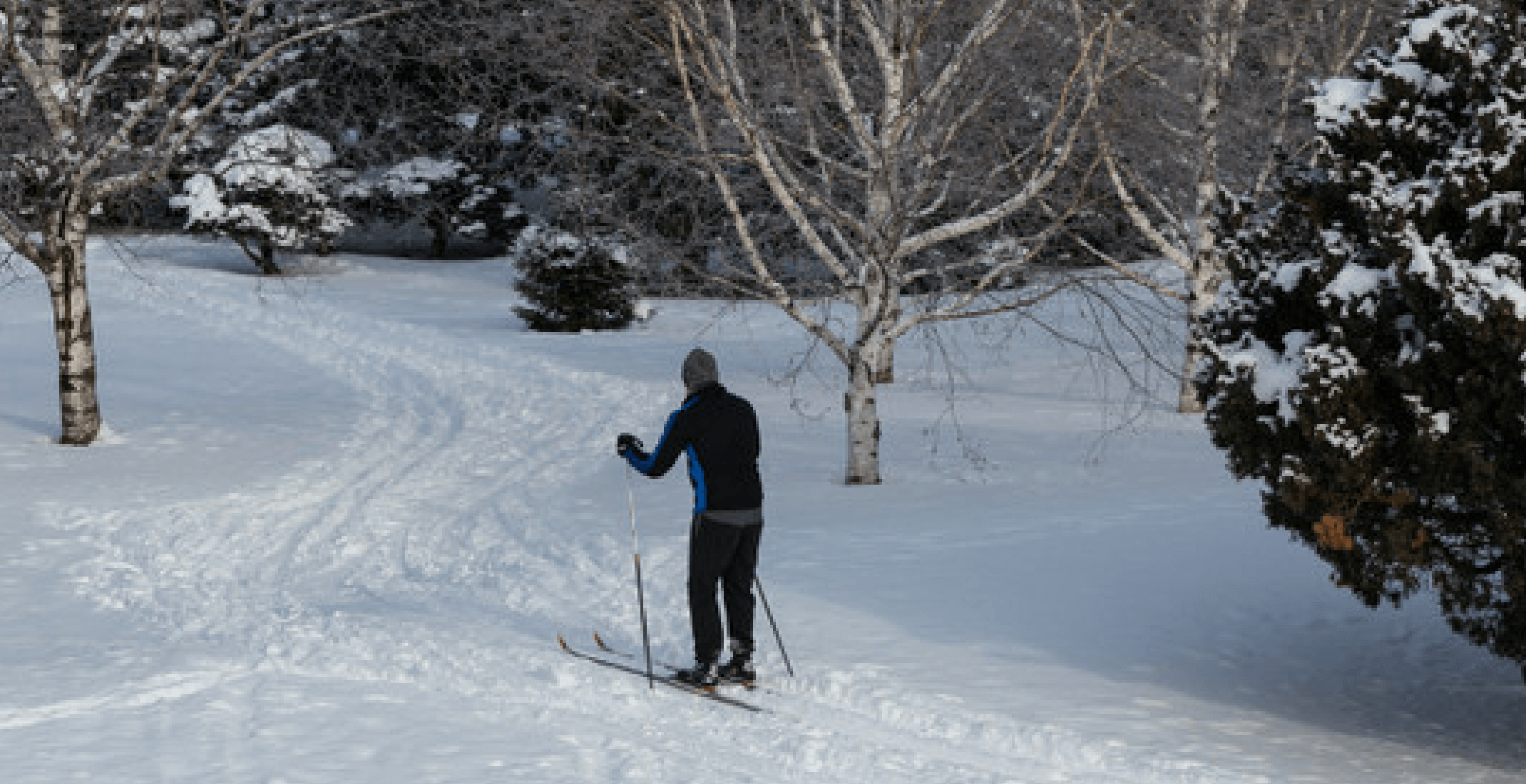 You can go cross country skiing at the Montreal Botanical Garden this winter