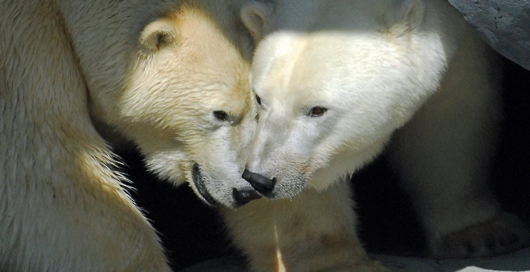 You can now have an AYCE Valentine's date at the Toronto Zoo