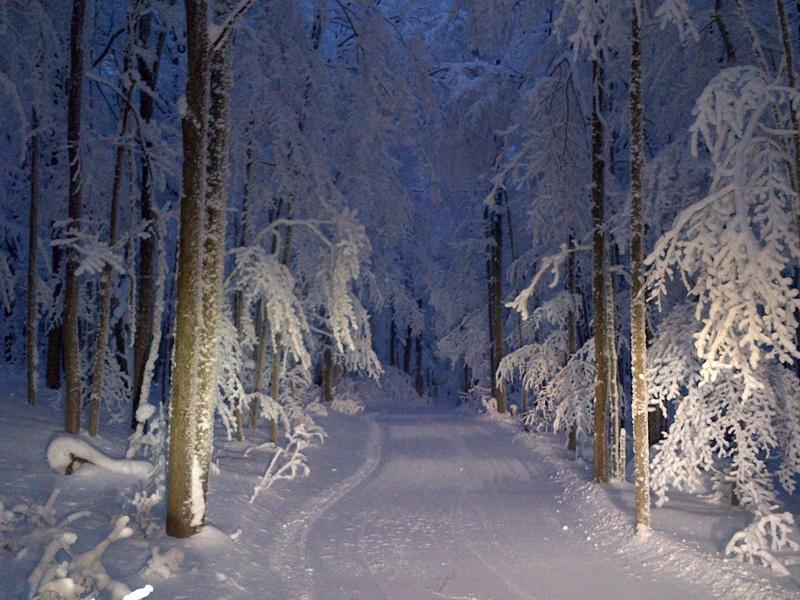 moonlight snowshoei