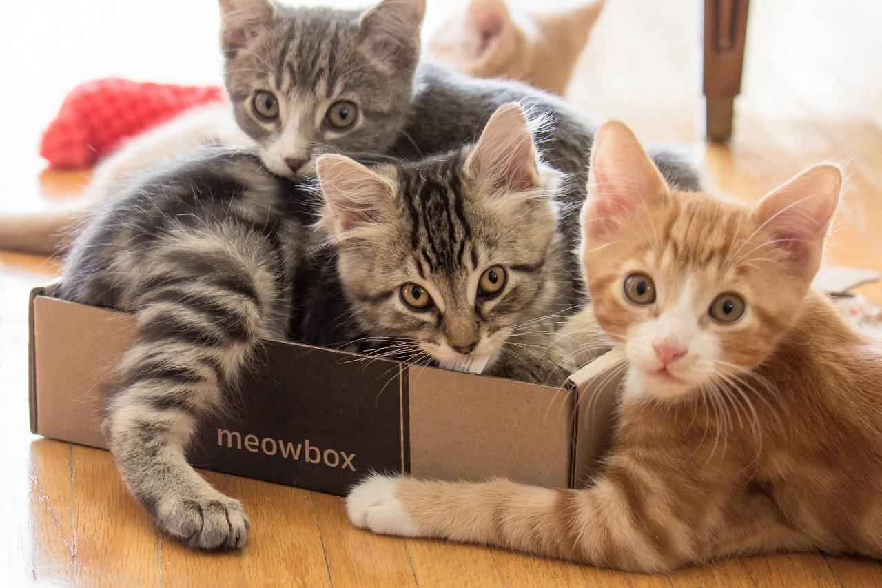 Meowbox 2400px long john silver 3396 edit edit1