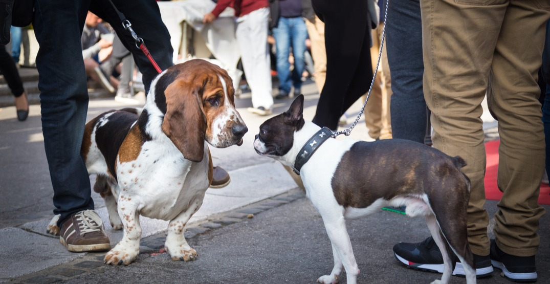 This is the ultimate dog lover's guide to LunarFest in Vancouver