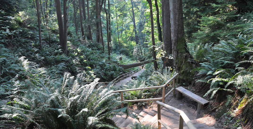 Several trails in Pacific Spirit Regional Park closed due to landslides