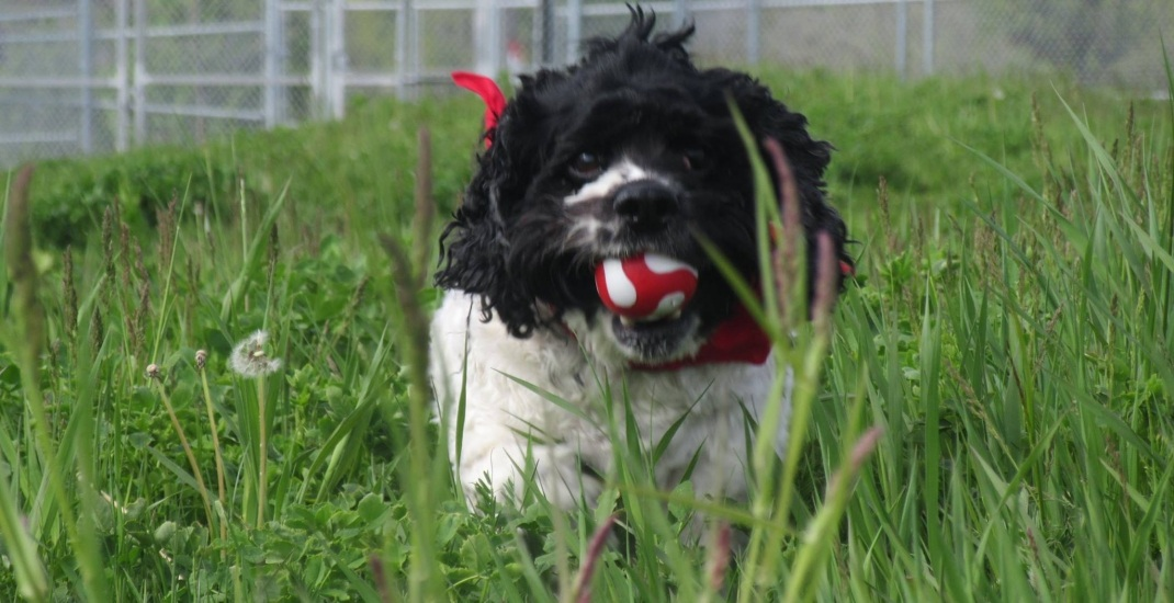 Toronto Animal Services looking for volunteers to build dog houses