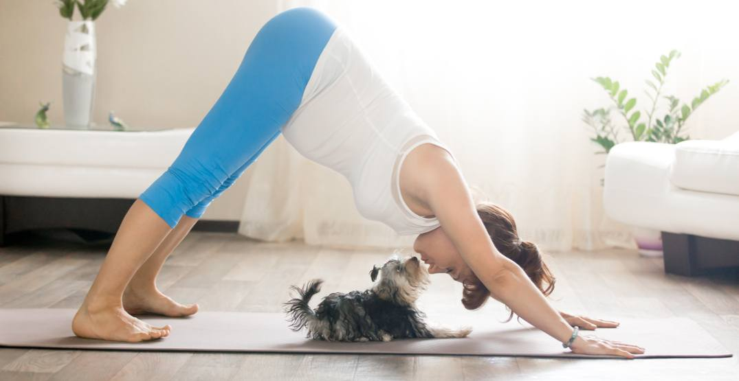 You can do yoga with your dog at this Calgary class