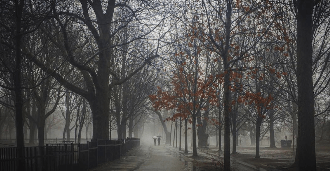 The mild weather is creating some creepy landscapes in Toronto (PHOTOS)