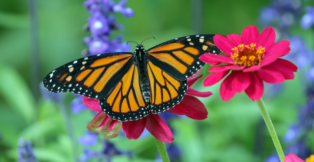 You've got to check out this magical butterfly festival at Montreal Botanical Garden
