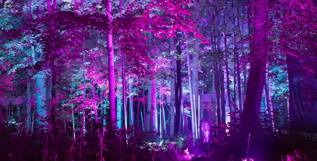 The Toronto Opera House is transforming into a psychedelic forest this March
