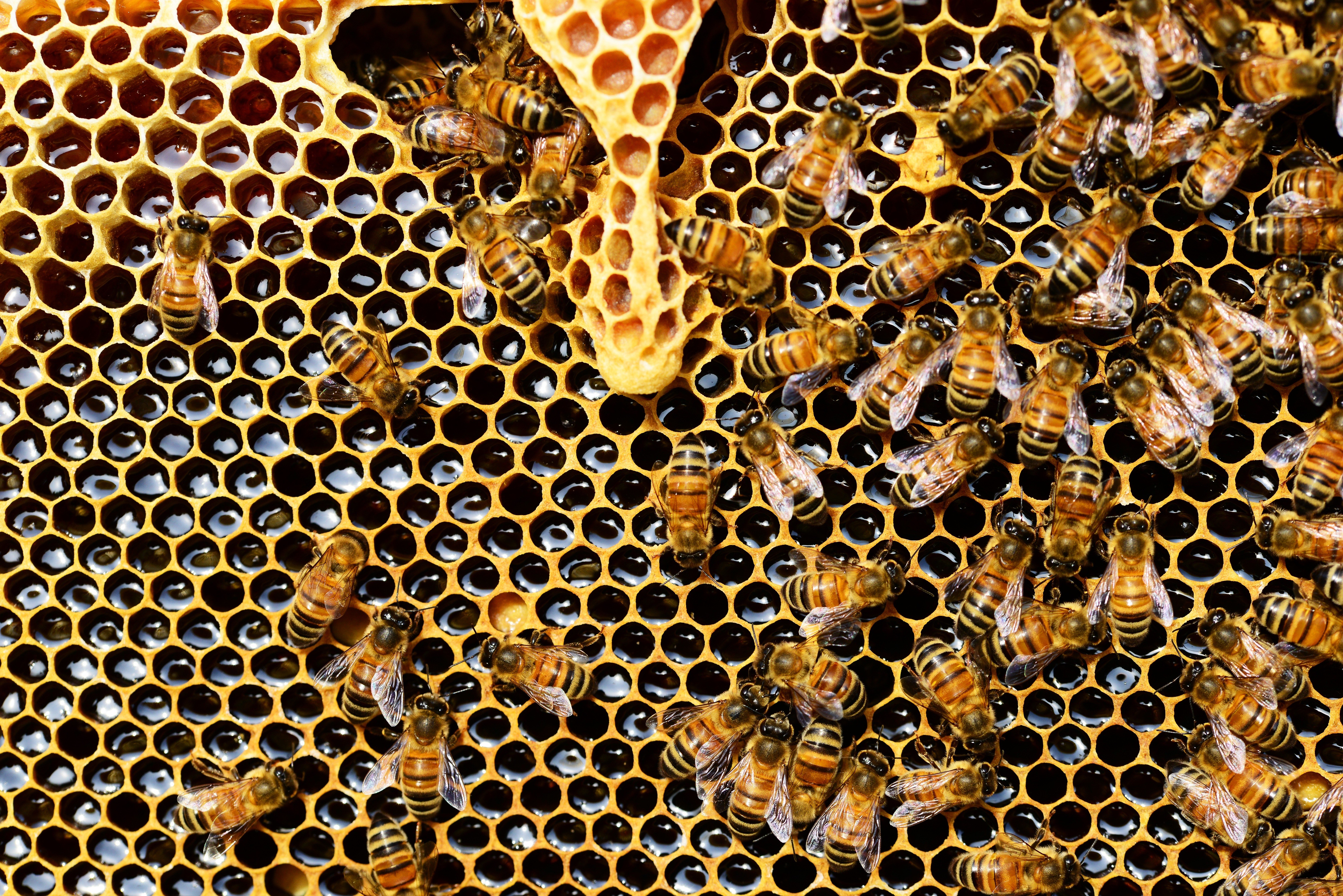 bees beekeeping honey comb hive
