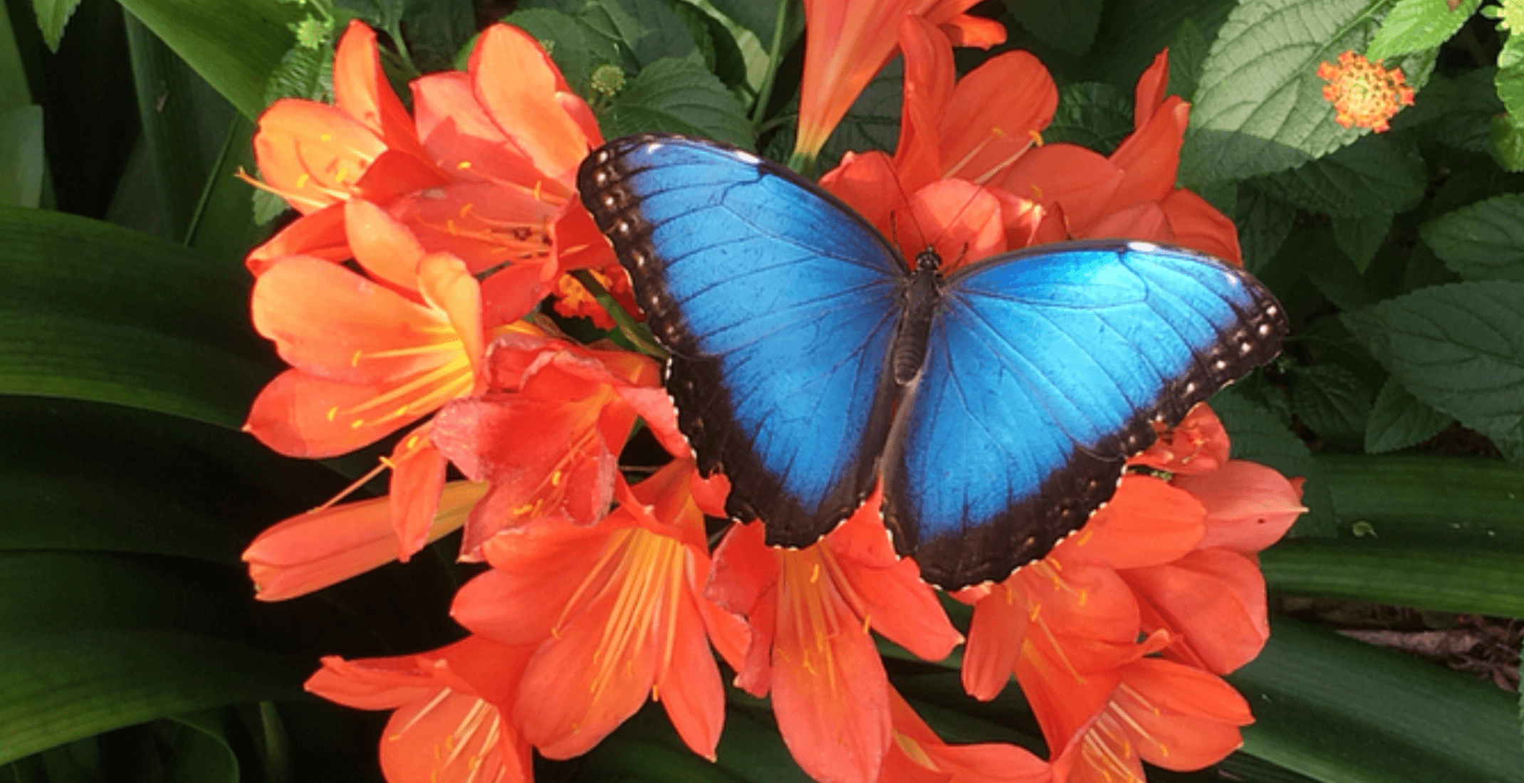 Butterflies Go Free is the most magical exhibit in Montreal right now (PHOTOS)