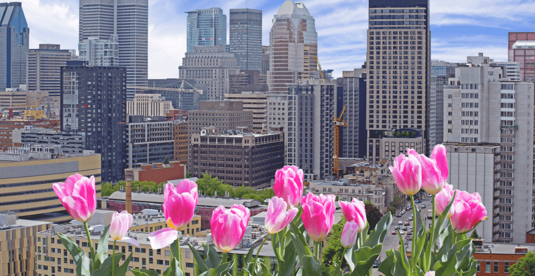 Montreal named one of the world's 'Best Spring Vacation' destinations