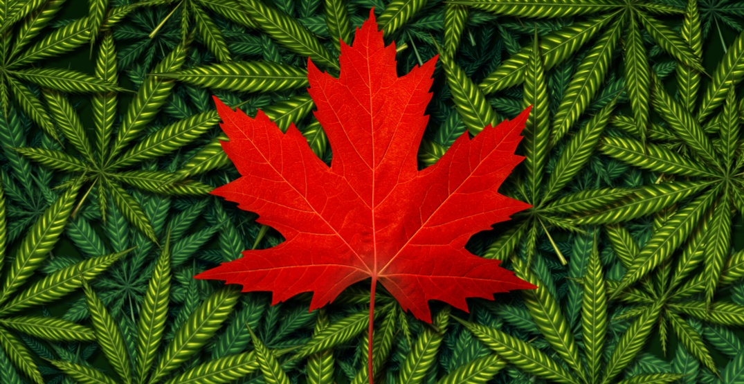8 legendary cannabis strains with Canadian origins