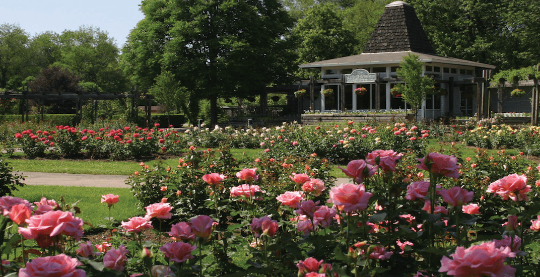 A beautiful new rose garden is opening near Toronto this summer