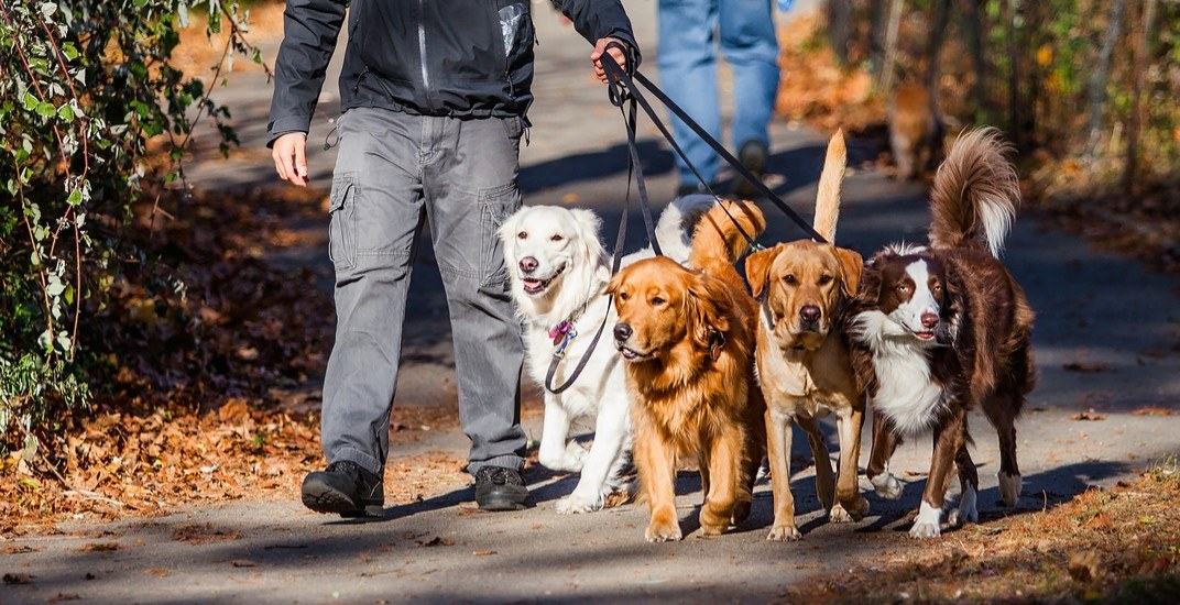 Vancouver's biggest dog meet-up is returning later this month