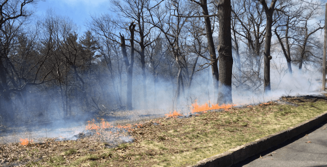There will be a controlled burn in High Park next month