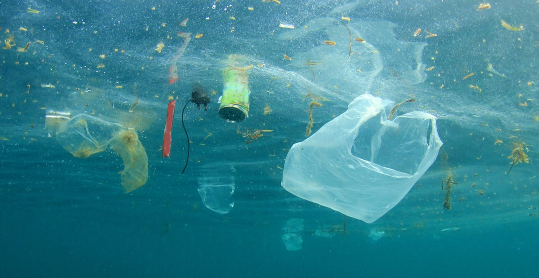 Ocean Wise launches campaign to fight plastic waste
