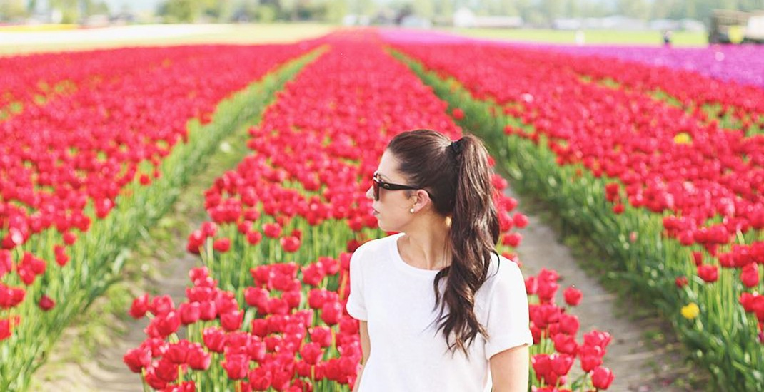 The magical Tulips of the Valley festival returns to Chilliwack this spring
