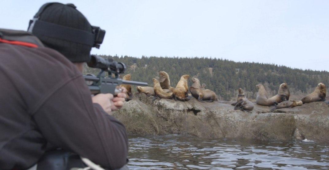 Sea lion with plastic rope around neck saved by Vancouver Aquarium
