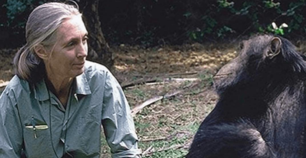 Jane Goodall to receive honorary degree from Simon Fraser University