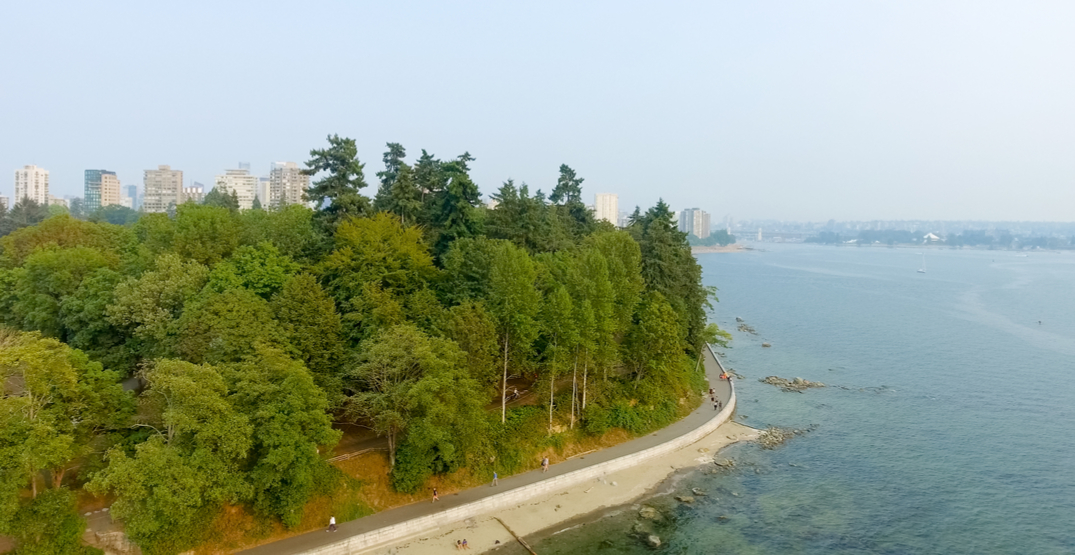 Man arrested for throwing knives at Stanley Park tree