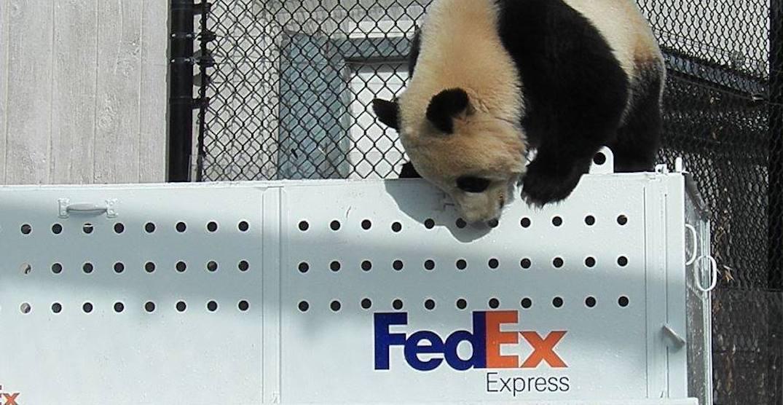Fed ex panda