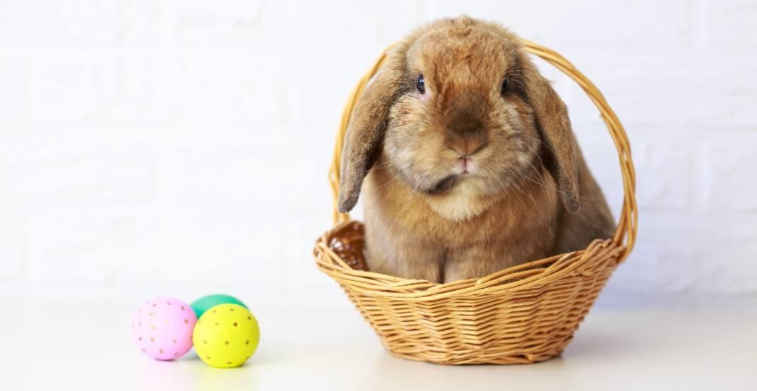 Bunny quarentine