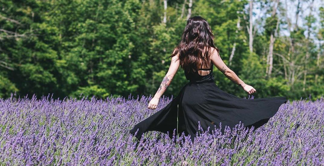 This stunning lavender farm near Toronto needs to be on your summer bucket list (PHOTOS)