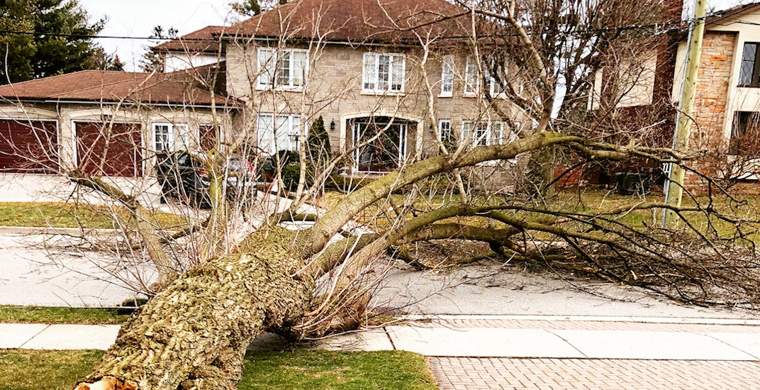 15 shots of the aftermath of Wednesday's powerful windstorm (PHOTOS)