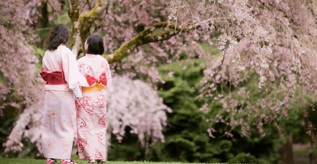 Celebrate Japanese culture and history at Vancouver's annual Cherry Blossom Festival