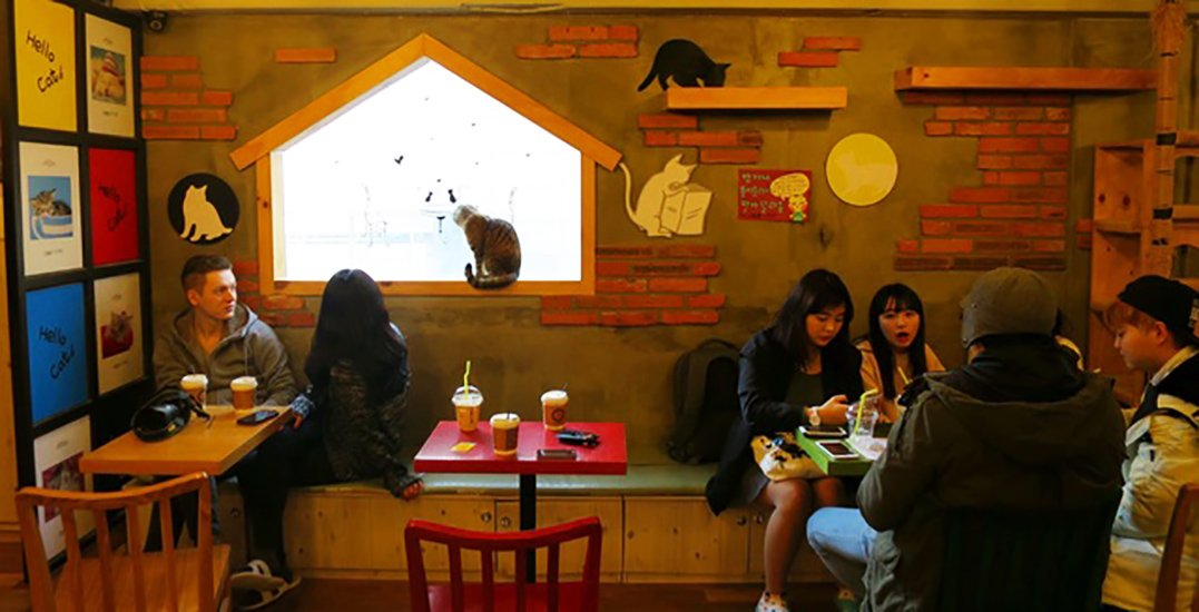 Montreal cat cafe banks on crowdfunding and an artisan market to finish renovations