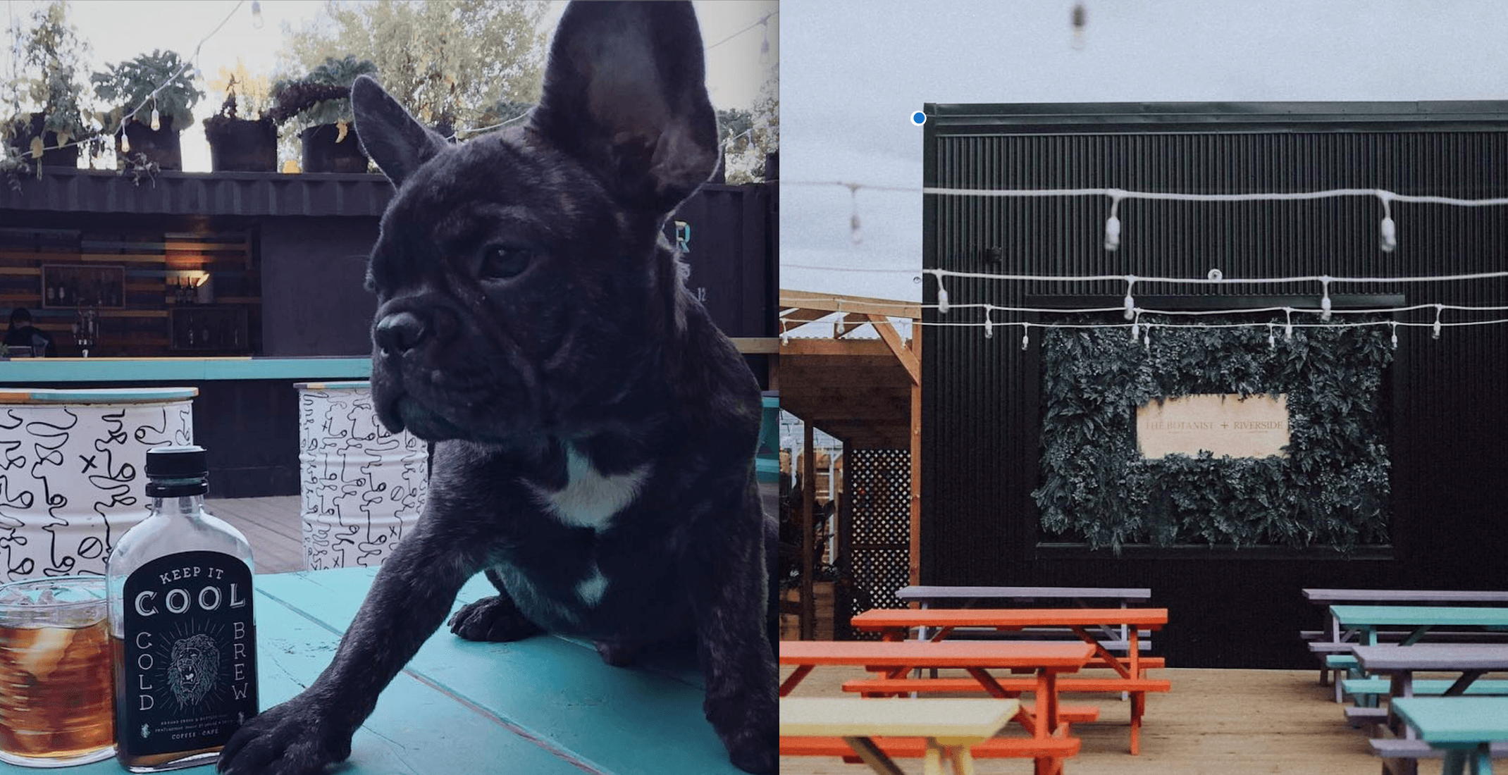 Grab a drink with your dog at this Montreal bar's summer 'Yappy Hour'